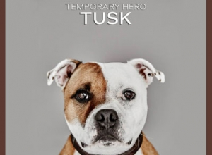 temporary-hero-tusk-01-670-380